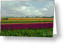 Nikon Nick's Tulip Landscape Greeting Card