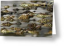 Nile Crocodiles Crocodylus Niloticus Greeting Card