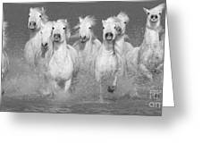 Nine White Horses Run Greeting Card