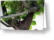 Nispero Tree Greeting Card