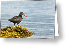 No Bird Is An Island Greeting Card