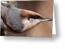No Hands - Fayetteville - Nuthatch Greeting Card