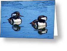 Male Hooded Merganser Pair Greeting Card