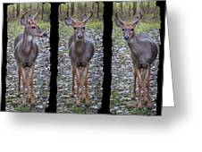 Curious Yearling Deer Greeting Card
