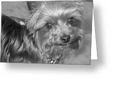 No-nonsense Pup Greeting Card