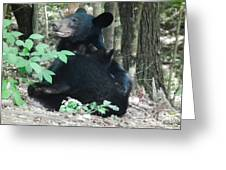 Bear - Cubs - Mother Nursing Greeting Card