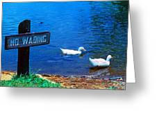 No Wading Greeting Card