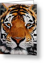 Nobility   Amur   Siberian  Tiger Greeting Card