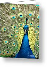 Noble Peacock Greeting Card