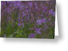nodding fireweed Netherlands Greeting Card