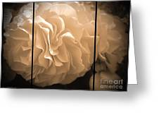 Non-stop Begonia Triptych Greeting Card