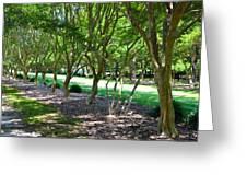 Norfolk Botanical Garden 3 Greeting Card