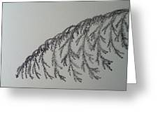 Norfolk Pine Greeting Card