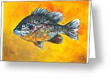 North America Sunfish Greeting Card