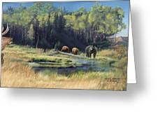 North American Waterhole Greeting Card