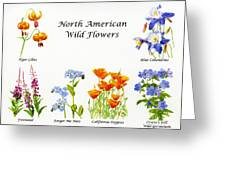 North American Wild Flowers Poster Print Greeting Card