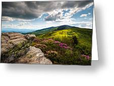 North Carolina Blue Ridge Mountains Roan Rhododendron Flowers Nc Greeting Card by Dave Allen
