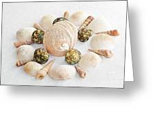 North Carolina Circle Of Sea Shells Greeting Card