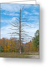 North Country Byway Greeting Card