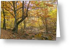North Creek Autumn - Mid Afternoon - 04043 Greeting Card by Byron Spencer