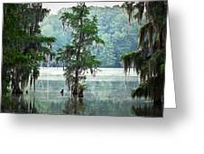 North Florida Cypress Swamp Greeting Card