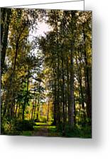 North Lions Park - Mount Vernon Washington Greeting Card