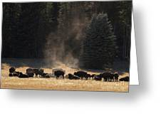 North Rim Bison Of The Grand Canyon Greeting Card