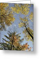 North Woods In The Fall Greeting Card