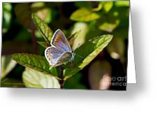 Northern Blue Greeting Card