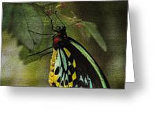 Northern Butterfly Greeting Card