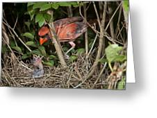 Northern Cardinal At Nest Greeting Card