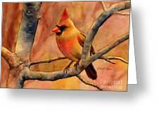 Northern Cardinal II Greeting Card