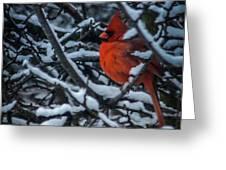Northern Cardinal In Winter Greeting Card