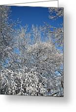 Northern Colors Greeting Card