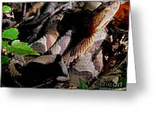 Northern Copperhead Greeting Card