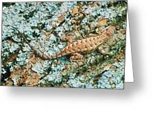 Northern Fence Lizard Greeting Card