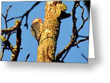 Northern Flicker At Sunrise Greeting Card