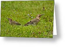 Northern Flicker Pictures 42 Greeting Card