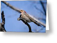 Northern Flicker Pictures 5 Greeting Card