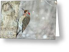 Northern Flicker Woodpecker Greeting Card