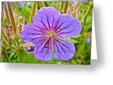 Northern Geranium By Transfiguration Of Our Lord Russian Orthodox Church In Ninilchik-ak Greeting Card