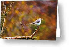 Northern Mockingbird Greeting Card