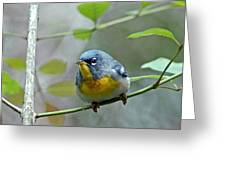 Northern Parula On Branch Greeting Card