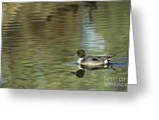 Northern Pintail In A Quiet Pond California Wildlife Greeting Card
