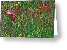 Northern Pitcher Plant In French Mountain Bog On Cape Breton Isl Greeting Card