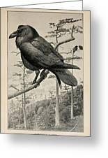Northern Raven Greeting Card