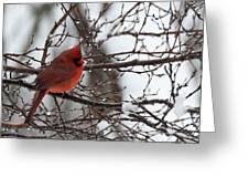 Northern Red Cardinal In Winter Greeting Card