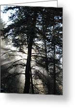 Northwoods Morning Greeting Card