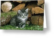 Norwegian Forest Kitten Greeting Card