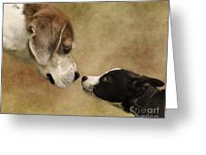 Nose To Nose Dogs Greeting Card